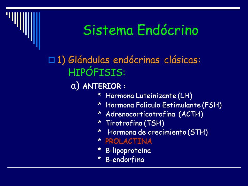 Sistema Endócrino 1) Glándulas endócrinas clásicas: HIPÓFISIS: a) ANTERIOR : * Hormona Luteinizante (LH) * Hormona Folículo Estimulante (FSH) * Adreno