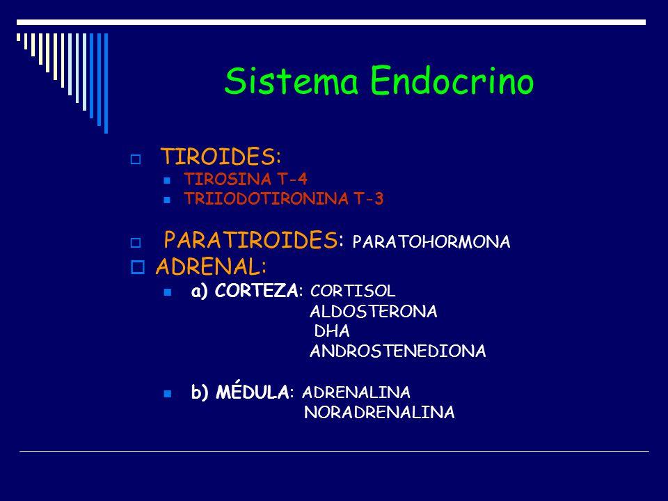 Sistema Endocrino TIROIDES: TIROSINA T-4 TRIIODOTIRONINA T-3 PARATIROIDES: PARATOHORMONA ADRENAL: a) CORTEZA: CORTISOL ALDOSTERONA DHA ANDROSTENEDIONA