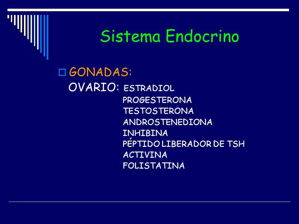 Sistema Endocrino GONADAS: OVARIO: ESTRADIOL PROGESTERONA TESTOSTERONA ANDROSTENEDIONA INHIBINA PÉPTIDO LIBERADOR DE TSH ACTIVINA FOLISTATINA