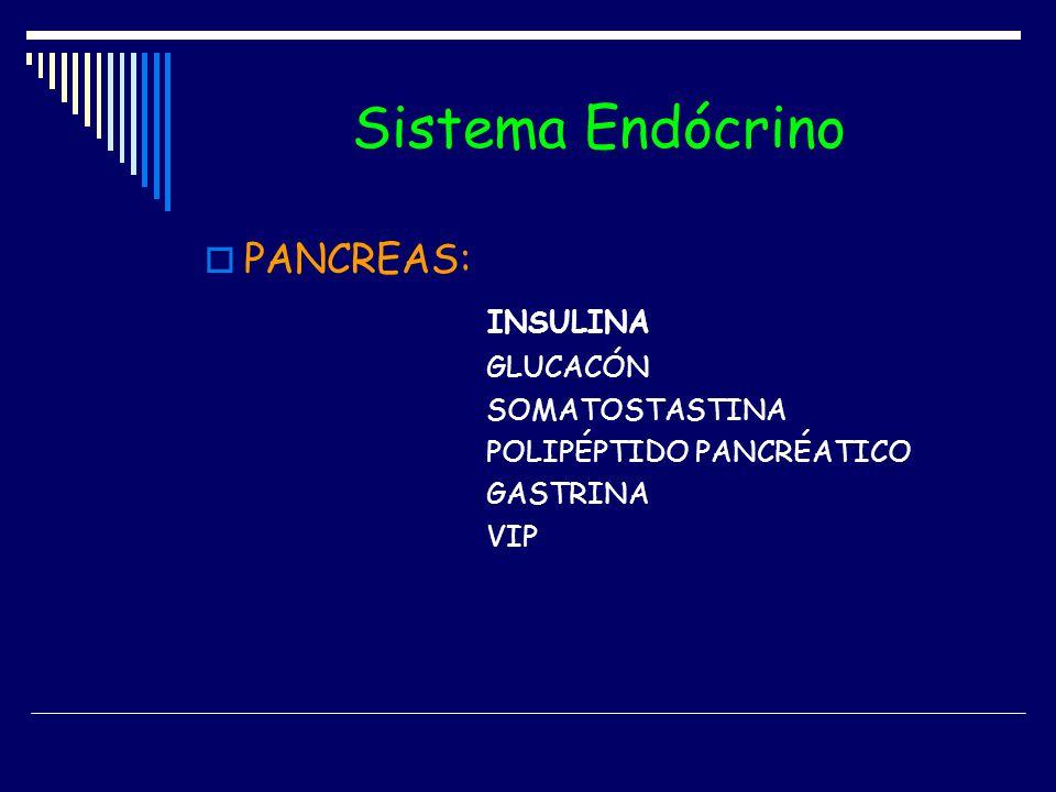 Sistema Endócrino PANCREAS: INSULINA GLUCACÓN SOMATOSTASTINA POLIPÉPTIDO PANCRÉATICO GASTRINA VIP