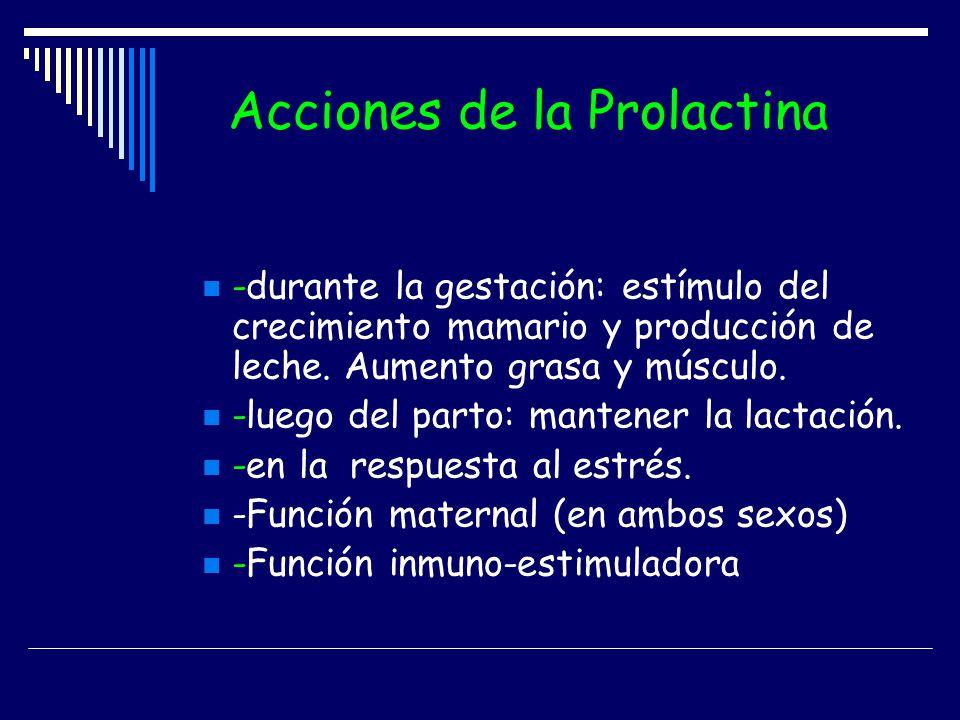 Acciones de la Prolactina -durante la gestación: estímulo del crecimiento mamario y producción de leche. Aumento grasa y músculo. -luego del parto: ma