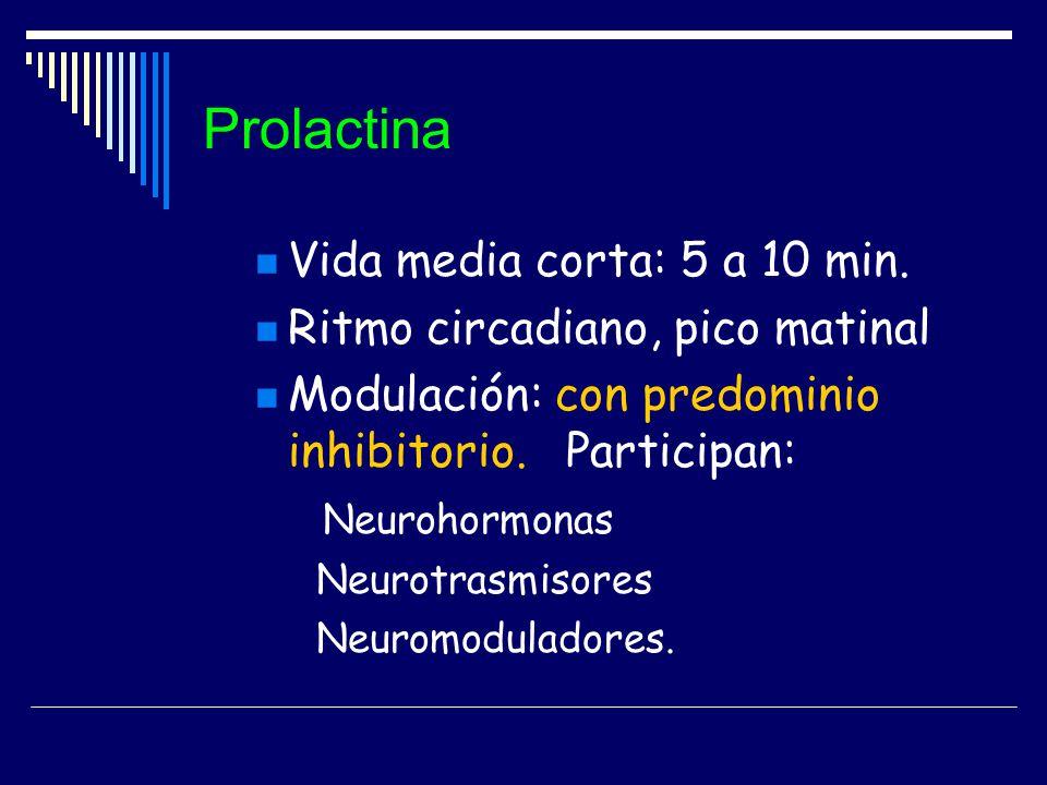 Prolactina Vida media corta: 5 a 10 min. Ritmo circadiano, pico matinal Modulación: con predominio inhibitorio. Participan: Neurohormonas Neurotrasmis