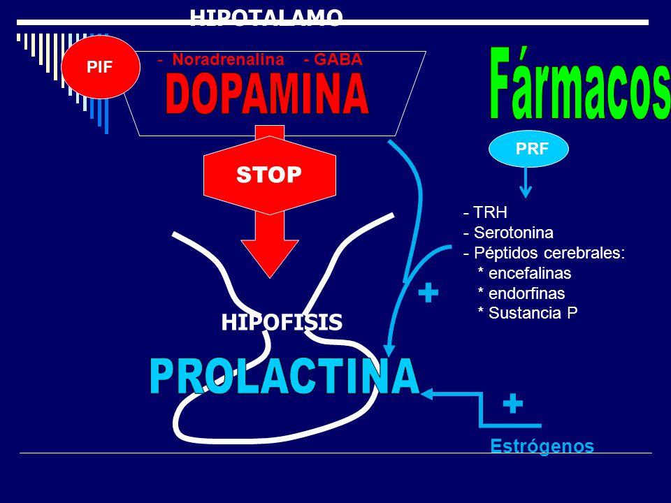 PRF STOP Estrógenos + - TRH - Serotonina - Péptidos cerebrales: * encefalinas * endorfinas * Sustancia P + HIPOTALAMO PIF - Noradrenalina - GABA HIPOF