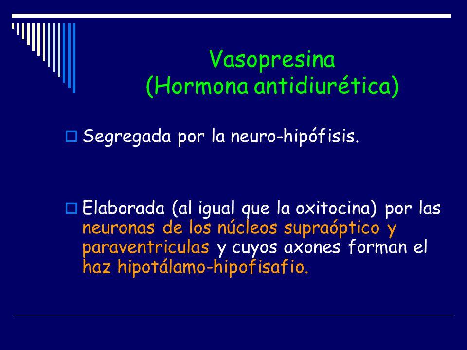 Vasopresina (Hormona antidiurética) Segregada por la neuro-hipófisis. Elaborada (al igual que la oxitocina) por las neuronas de los núcleos supraóptic