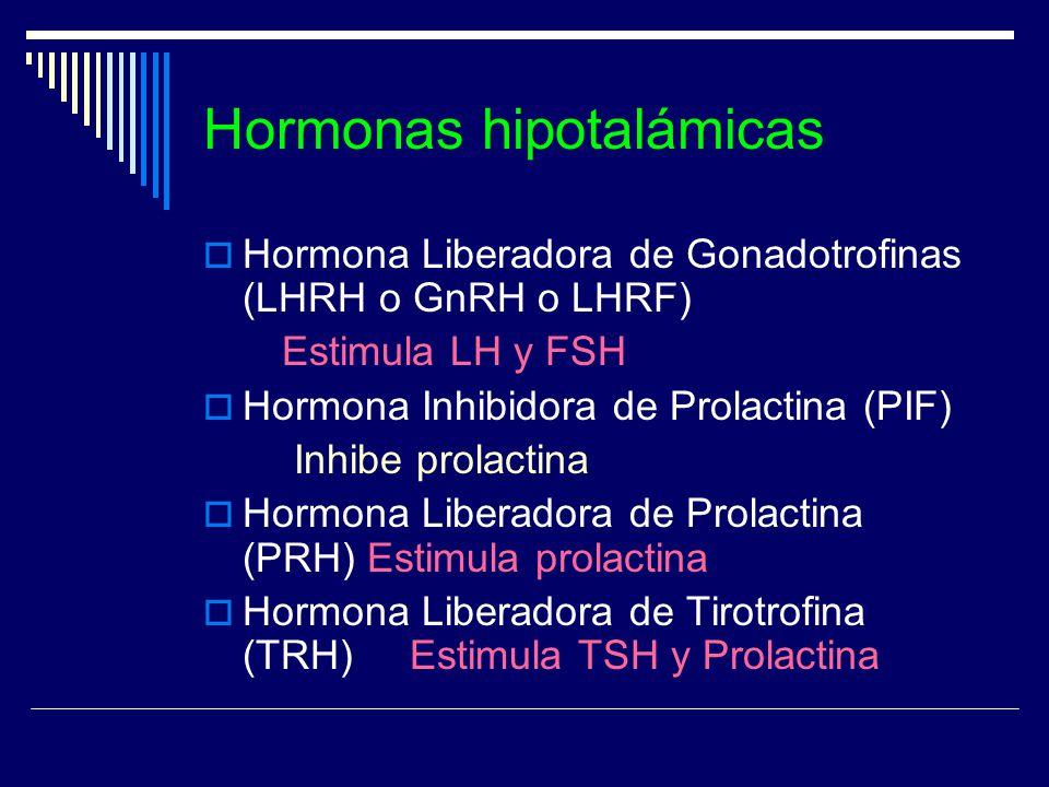 Hormonas hipotalámicas Hormona Liberadora de Gonadotrofinas (LHRH o GnRH o LHRF) Estimula LH y FSH Hormona Inhibidora de Prolactina (PIF) Inhibe prola