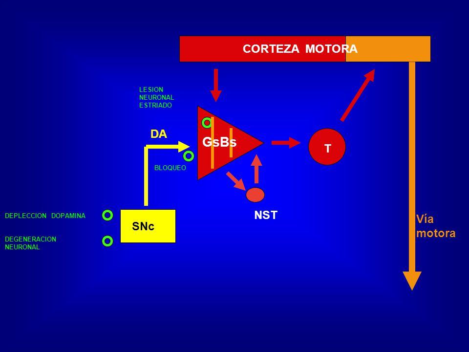 T SNc CORTEZA MOTORA Vía motora DA NST GsBs DEPLECCION DOPAMINA DEGENERACION NEURONAL BLOQUEO LESION NEURONAL ESTRIADO