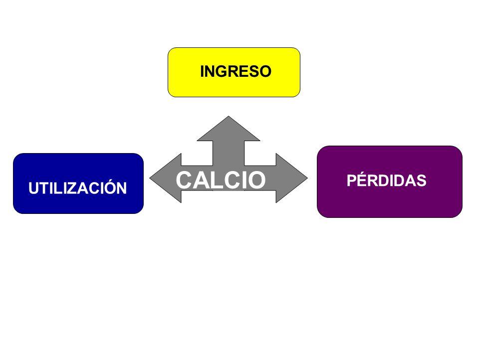 CALCIO INGRESO UTILIZACIÓN PÉRDIDAS