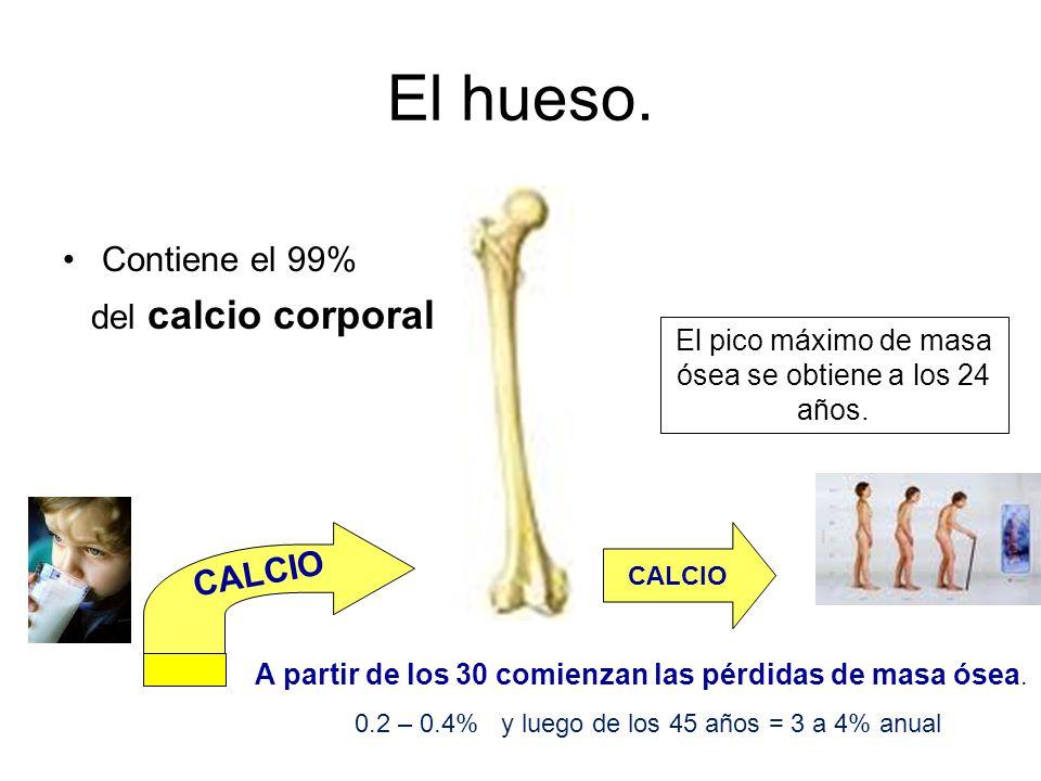 El hueso. Contiene el 99% del calcio corporal El pico máximo de masa ósea se obtiene a los 24 años. CALCIO A partir de los 30 comienzan las pérdidas d