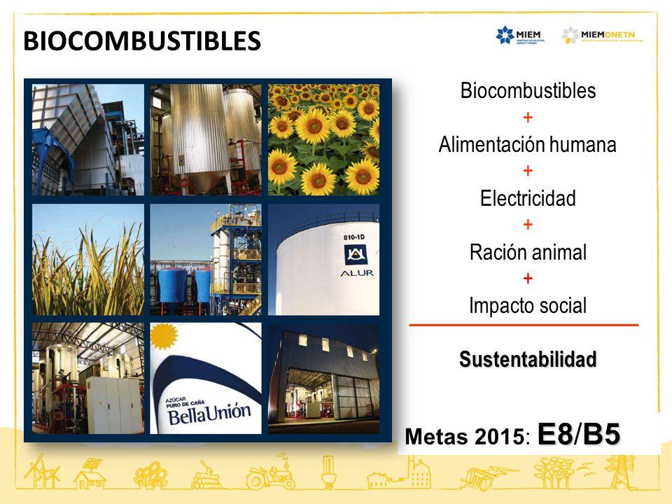 BIOCOMBUSTIBLES E8B5 Metas 2015: E8/B5 Biocombustibles + Alimentación humana + Electricidad + Ración animal + Impacto socialSustentabilidad