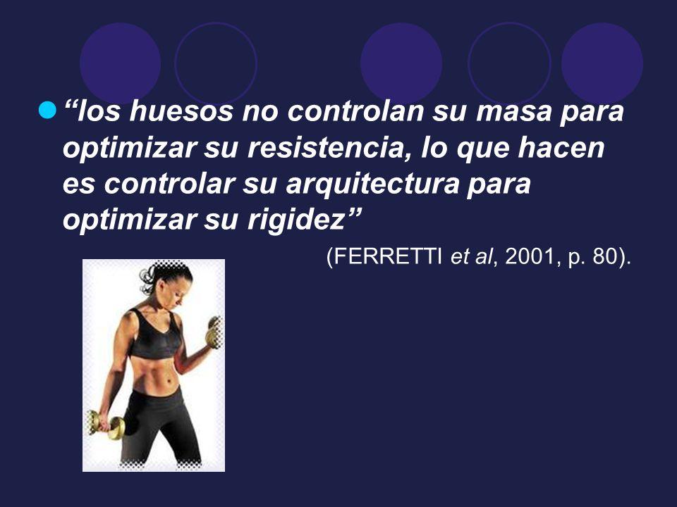 los huesos no controlan su masa para optimizar su resistencia, lo que hacen es controlar su arquitectura para optimizar su rigidez (FERRETTI et al, 20