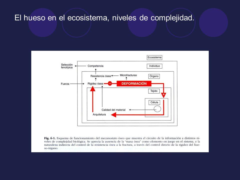 El hueso en el ecosistema, niveles de complejidad.