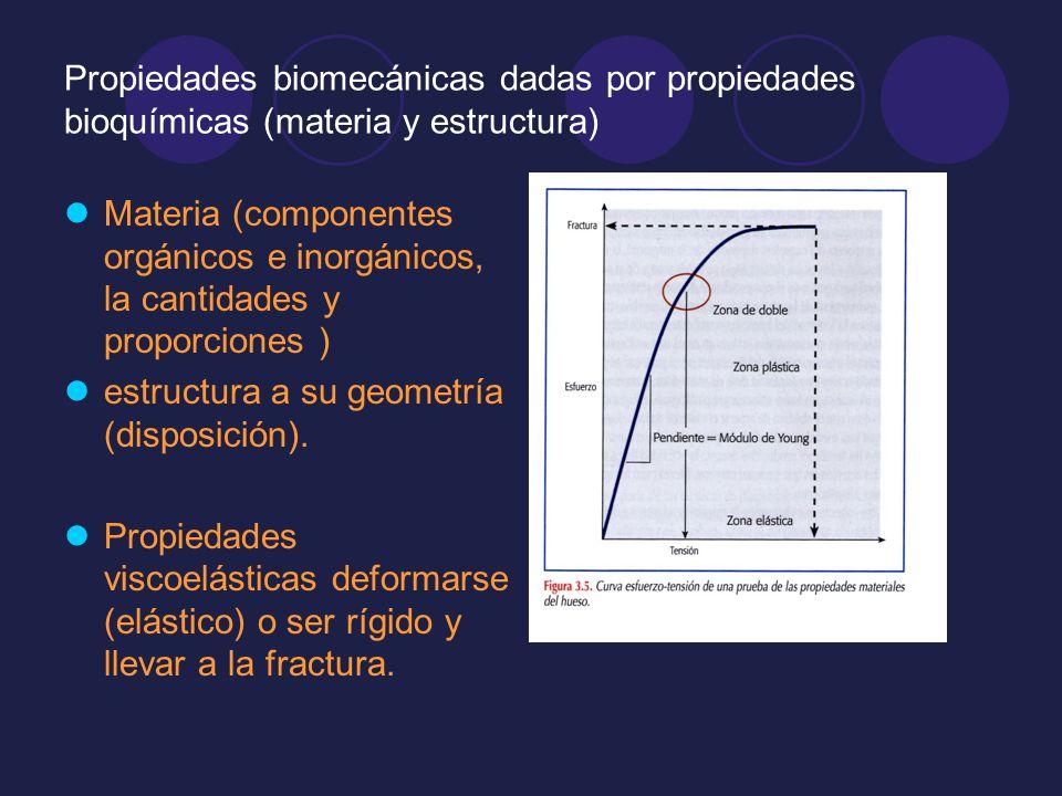 Propiedades biomecánicas dadas por propiedades bioquímicas (materia y estructura) Materia (componentes orgánicos e inorgánicos, la cantidades y propor