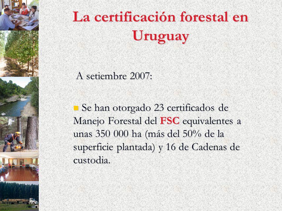 La certificación forestal en Uruguay A setiembre 2007: A setiembre 2007: Se han otorgado 23 certificados de Manejo Forestal del FSC equivalentes a unas 350 000 ha (más del 50% de la superficie plantada) y 16 de Cadenas de custodia.