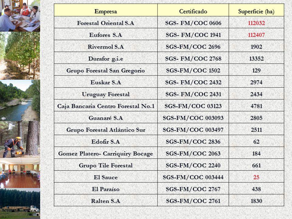EmpresaCertificado Superficie (ha) Forestal Oriental S.A SGS- FM/COC 0606 112032 Eufores S.A SGS- FM/COC 1941 112407 Rivermol S.A SGS-FM/COC 2696 1902 Durafor g.i.e SGS- FM/COC 2768 13352 Grupo Forestal San Gregorio SGS-FM/COC 1502 129 Euskar S.A SGS- FM/COC 2432 2974 Uruguay Forestal SGS- FM/COC 2431 2434 Caja Bancaria Centro Forestal No.1 SGS-FM/COC 03123 4781 Guanaré S.A SGS-FM/COC 003093 2805 Grupo Forestal Atlántico Sur SGS-FM/COC 003497 2511 Edofir S.A SGS-FM/COC 2836 62 Gomez Platero- Carriquiry Bocage SGS-FM/COC 2063 184 Grupo Tile Forestal SGS-FM/COC 2240 661 El Sauce SGS-FM/COC 003444 25 El Paraíso SGS-FM/COC 2767 438 Ralten S.A SGS-FM/COC 2761 1830