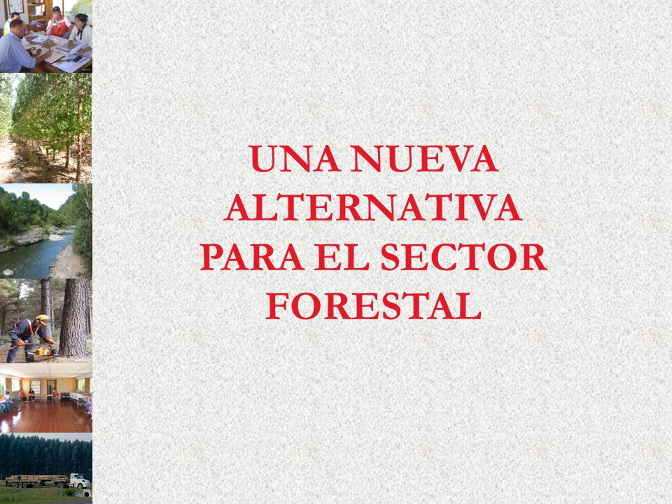 UNA NUEVA ALTERNATIVA PARA EL SECTOR FORESTAL