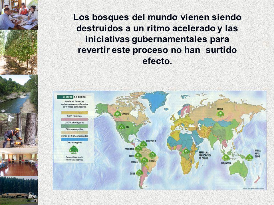 Los bosques del mundo vienen siendo destruidos a un ritmo acelerado y las iniciativas gubernamentales para revertir este proceso no han surtido efecto.