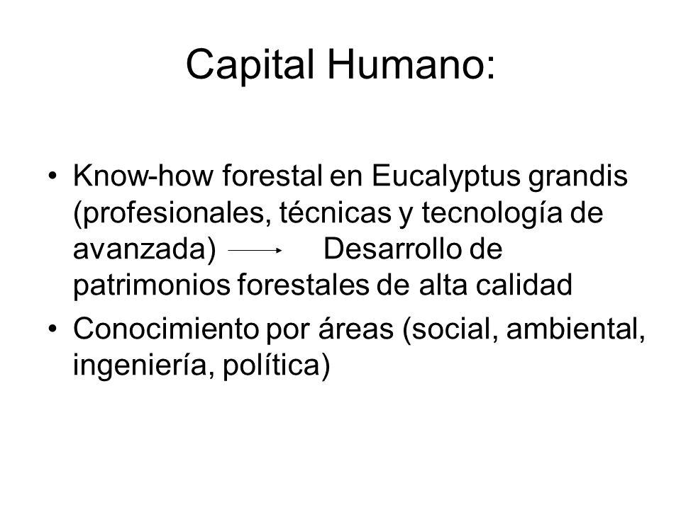 Forestal Oriental Empresa forestal líder en Uruguay -Exportaciones 2006 1.700.000 m3 -Proveerá con madera propia el 70% del consumo de la planta de Celulosa, y el restante 30% a través del Programa de Fomento a pequeños productores -Empleo de Forestal Oriental: -Directos + Indirectos; 1.500 personas