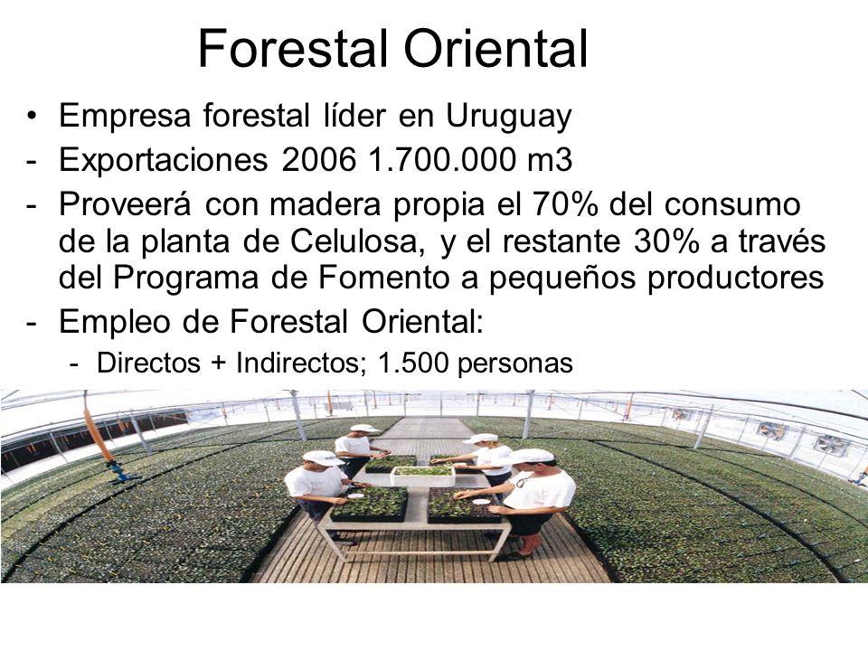 Junto con el capital finlandés: Know-how industrial forestal de última generación Cuna de tecnología industrial forestal Know-how económico forestal