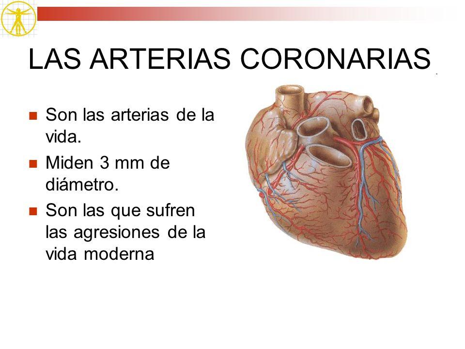 LAS ARTERIAS CORONARIAS Son las arterias de la vida. Miden 3 mm de diámetro. Son las que sufren las agresiones de la vida moderna