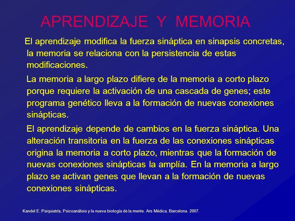 APRENDIZAJE Y MEMORIA El aprendizaje modifica la fuerza sináptica en sinapsis concretas, la memoria se relaciona con la persistencia de estas modifica