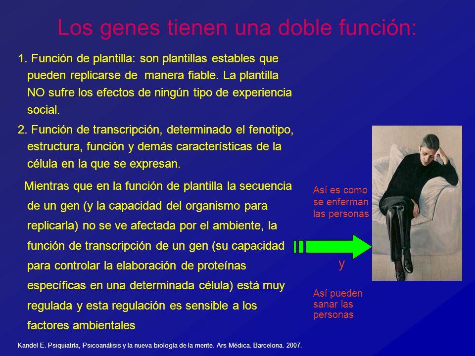 Los genes tienen una doble función: 1. Función de plantilla: son plantillas estables que pueden replicarse de manera fiable. La plantilla NO sufre los