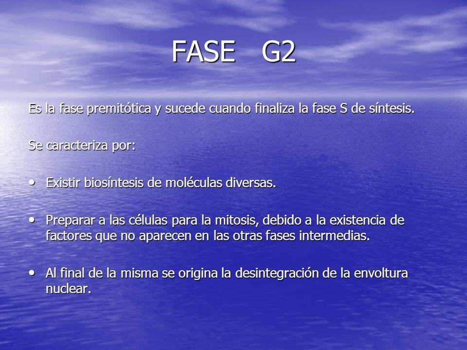 FASE G2 Es la fase premitótica y sucede cuando finaliza la fase S de síntesis. Se caracteriza por: Existir biosíntesis de moléculas diversas. Existir