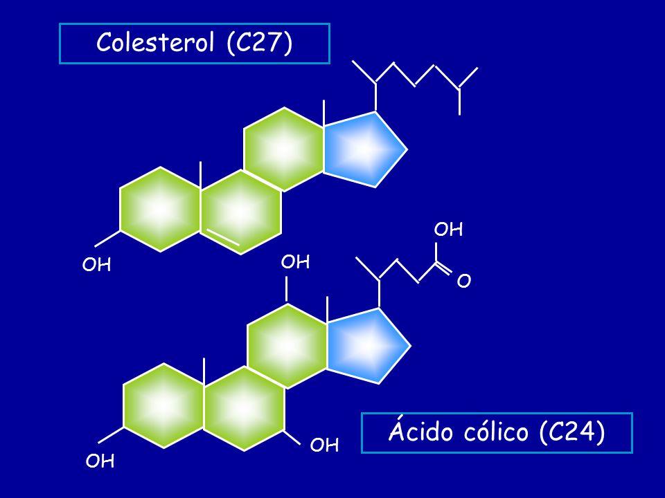 Colesterol (C27) OH O Ácido cólico (C24)