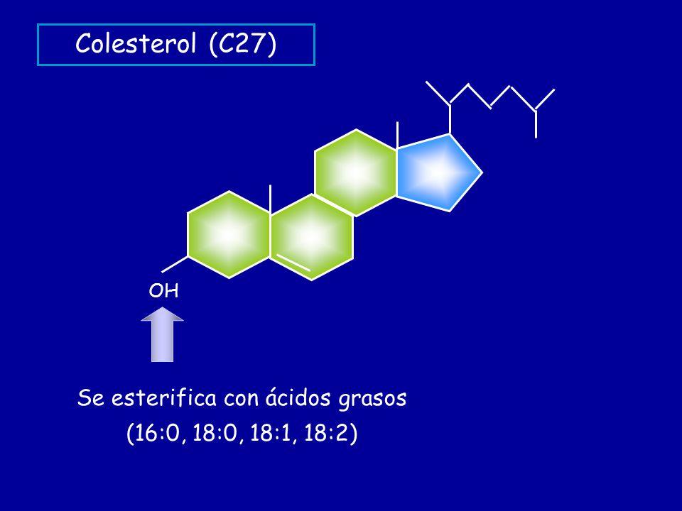 OH Se esterifica con ácidos grasos (16:0, 18:0, 18:1, 18:2) Colesterol (C27)