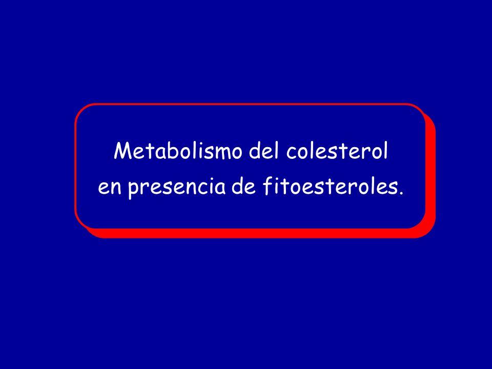 Metabolismo del colesterol en presencia de fitoesteroles. Metabolismo del colesterol en presencia de fitoesteroles.