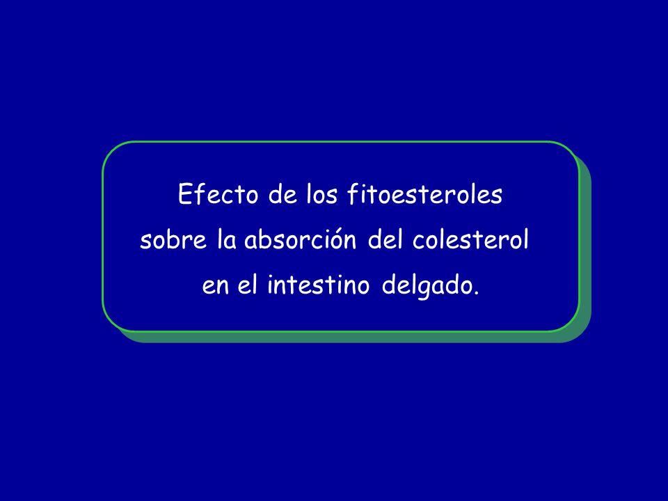 Efecto de los fitoesteroles sobre la absorción del colesterol en el intestino delgado. Efecto de los fitoesteroles sobre la absorción del colesterol e