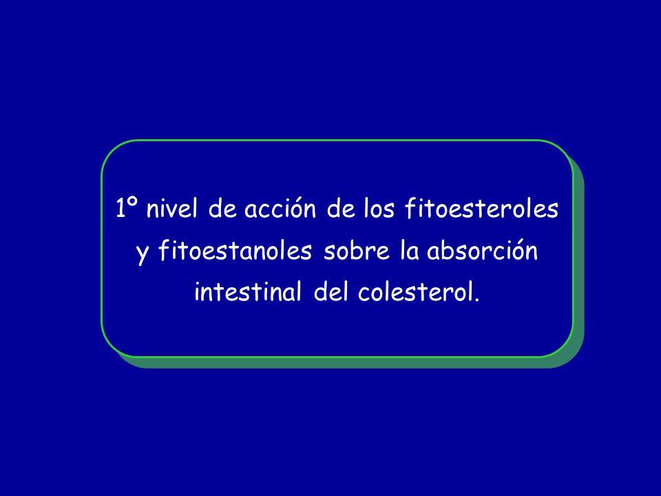 1º nivel de acción de los fitoesteroles y fitoestanoles sobre la absorción intestinal del colesterol. 1º nivel de acción de los fitoesteroles y fitoes