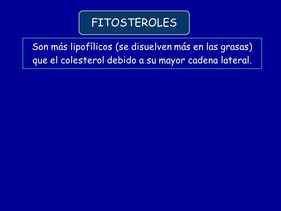Son más lipofílicos (se disuelven más en las grasas) que el colesterol debido a su mayor cadena lateral. FITOSTEROLES