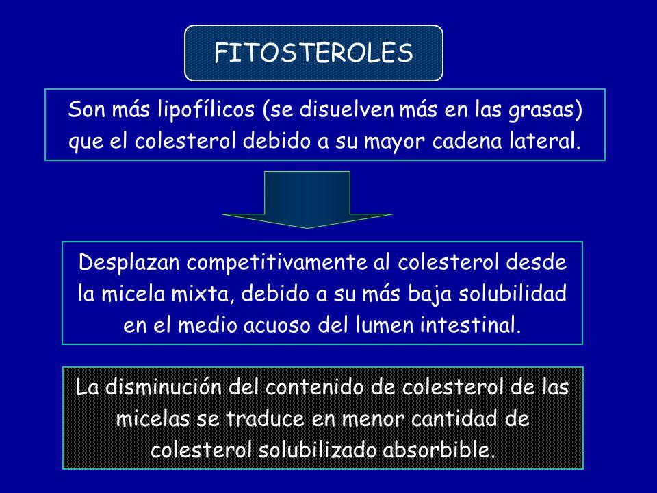 Son más lipofílicos (se disuelven más en las grasas) que el colesterol debido a su mayor cadena lateral. Desplazan competitivamente al colesterol desd