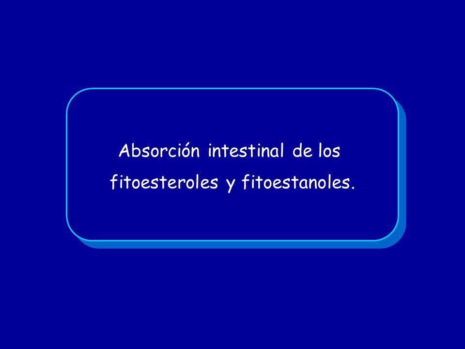 Absorción intestinal de los fitoesteroles y fitoestanoles. Absorción intestinal de los fitoesteroles y fitoestanoles.
