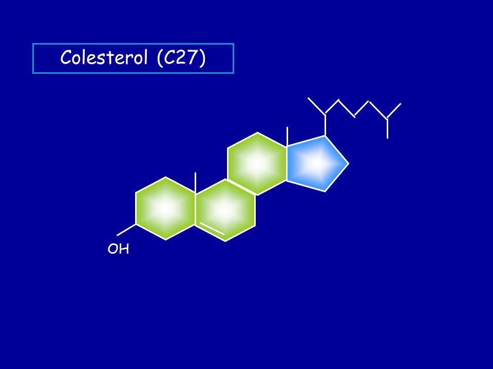 COLESTEROL elemento estructural de las membranas celulares precursor sales biliares hormonas esteroideas vitamina D