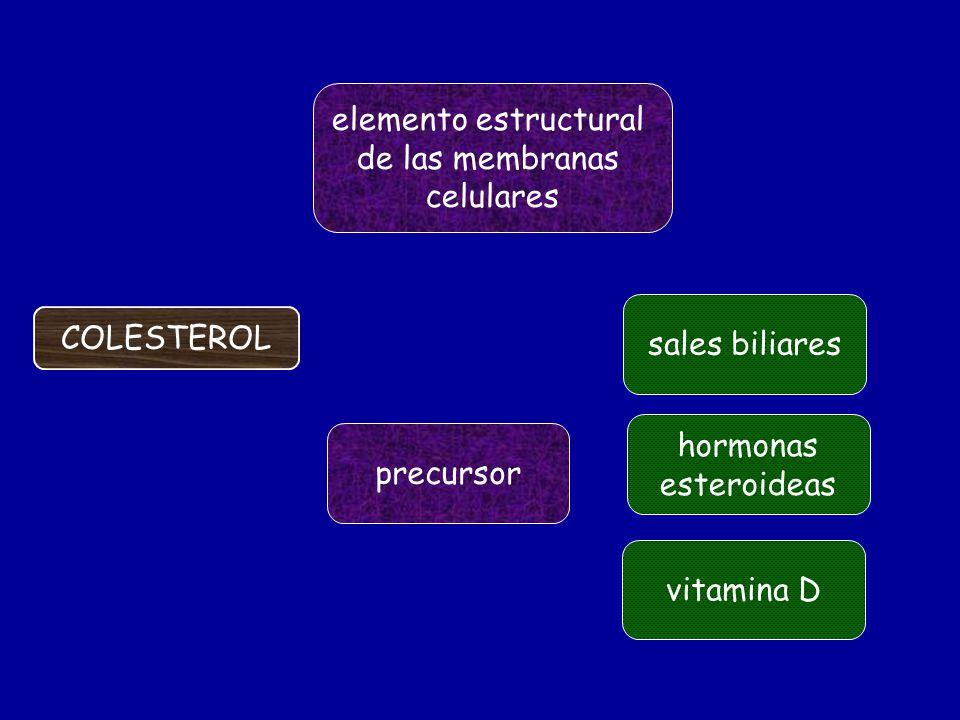 Son más lipofílicos (se disuelven más en las grasas) que el colesterol debido a su mayor cadena lateral.