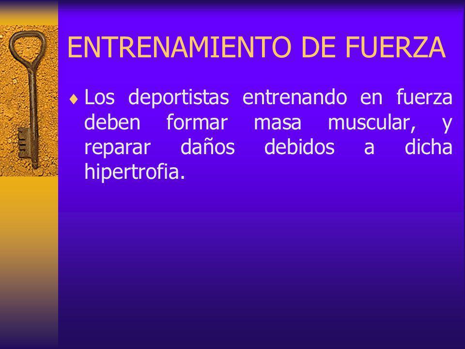 ENTRENAMIENTO DE FUERZA Los deportistas entrenando en fuerza deben formar masa muscular, y reparar daños debidos a dicha hipertrofia.