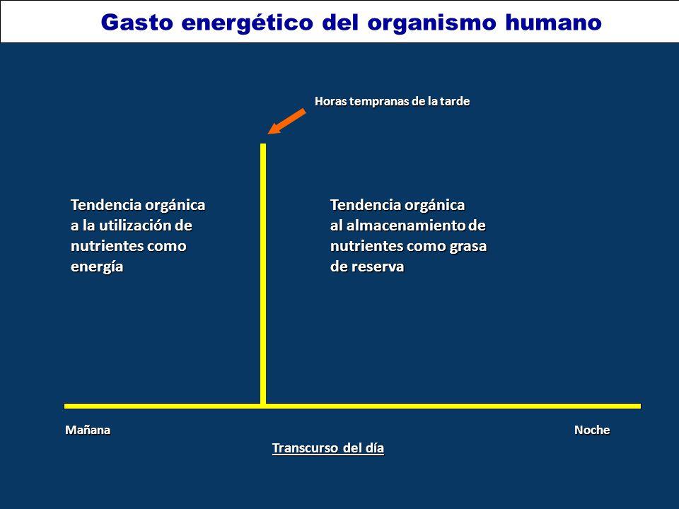 Transcurso del día MañanaNoche Horas tempranas de la tarde Tendencia orgánica a la utilización de nutrientes como energía Tendencia orgánica al almacenamiento de nutrientes como grasa de reserva Gasto energético del organismo humano