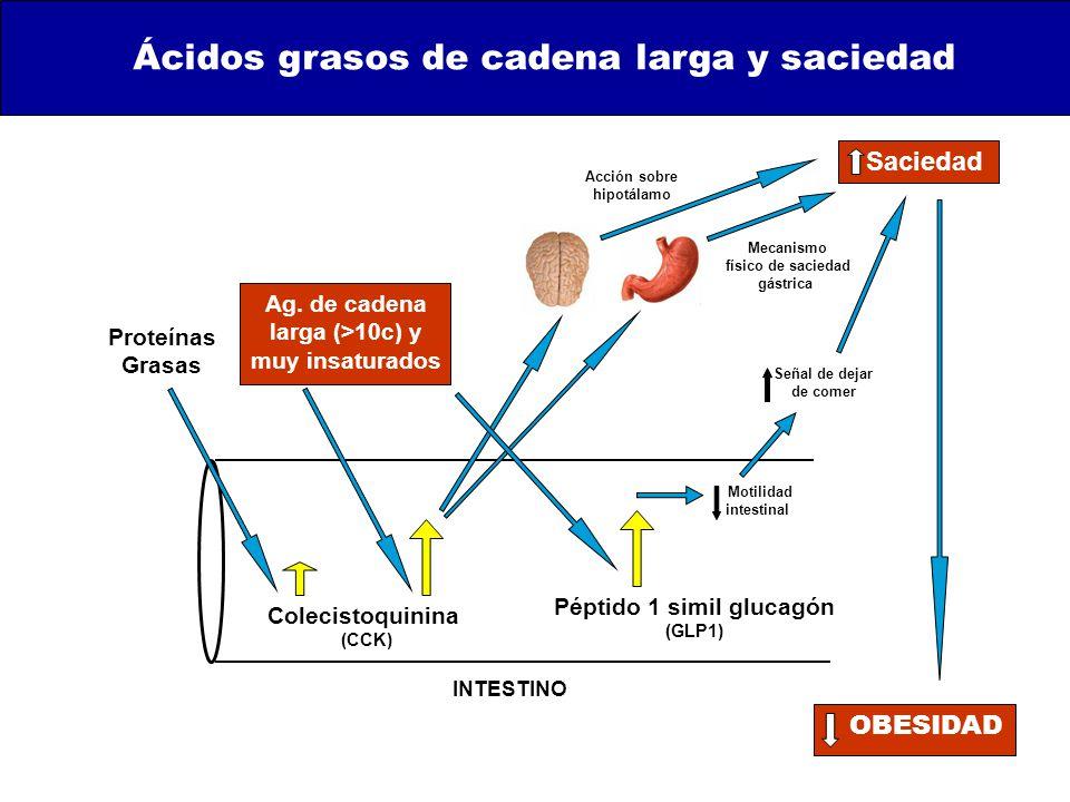 Colecistoquinina (CCK) Proteínas Grasas Ag.