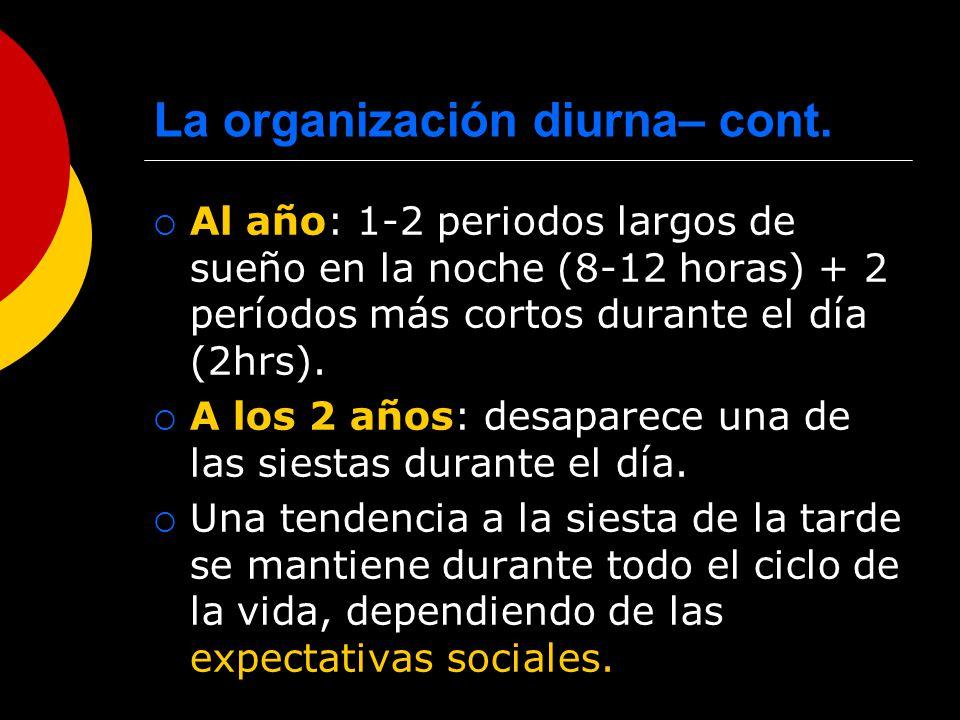 La organización diurna– cont.