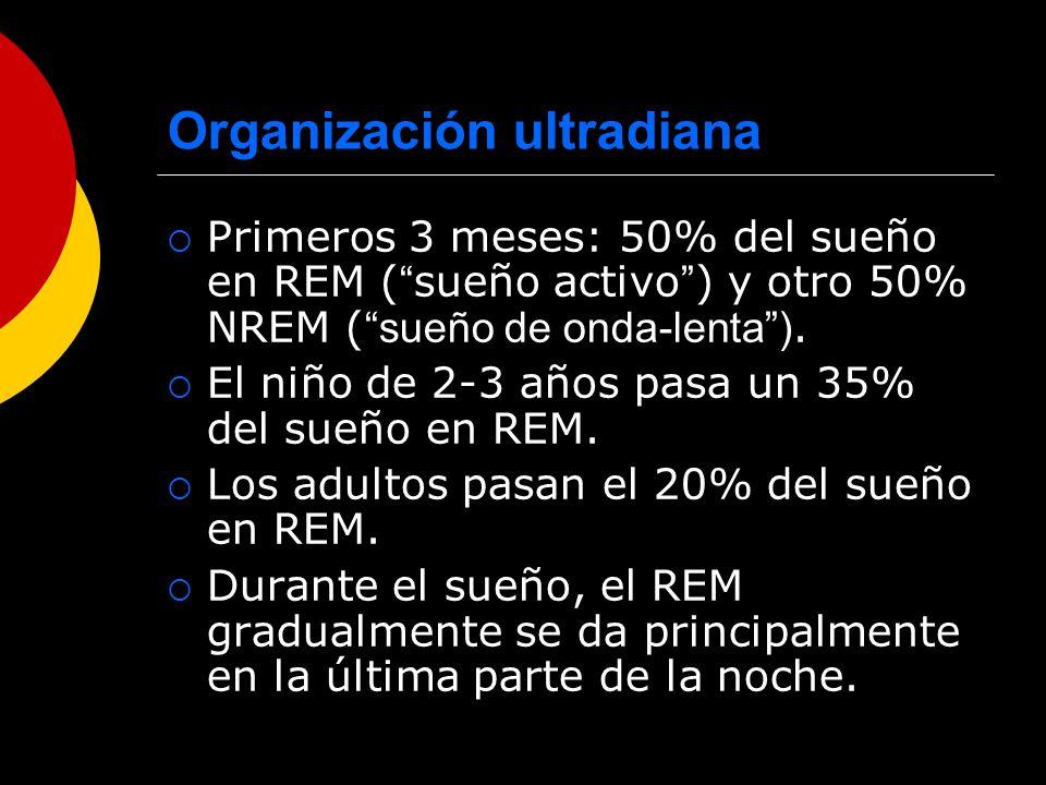 Organización ultradiana Primeros 3 meses: 50% del sueño en REM ( sueño activo ) y otro 50% NREM ( sueño de onda-lenta). El niño de 2-3 años pasa un 35