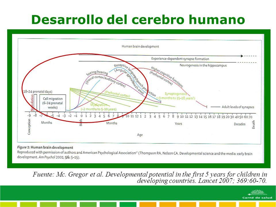 Desarrollo del cerebro humano Fuente: Mc. Gregor et al. Developmental potential in the first 5 years for children in developing countries. Lancet 2007
