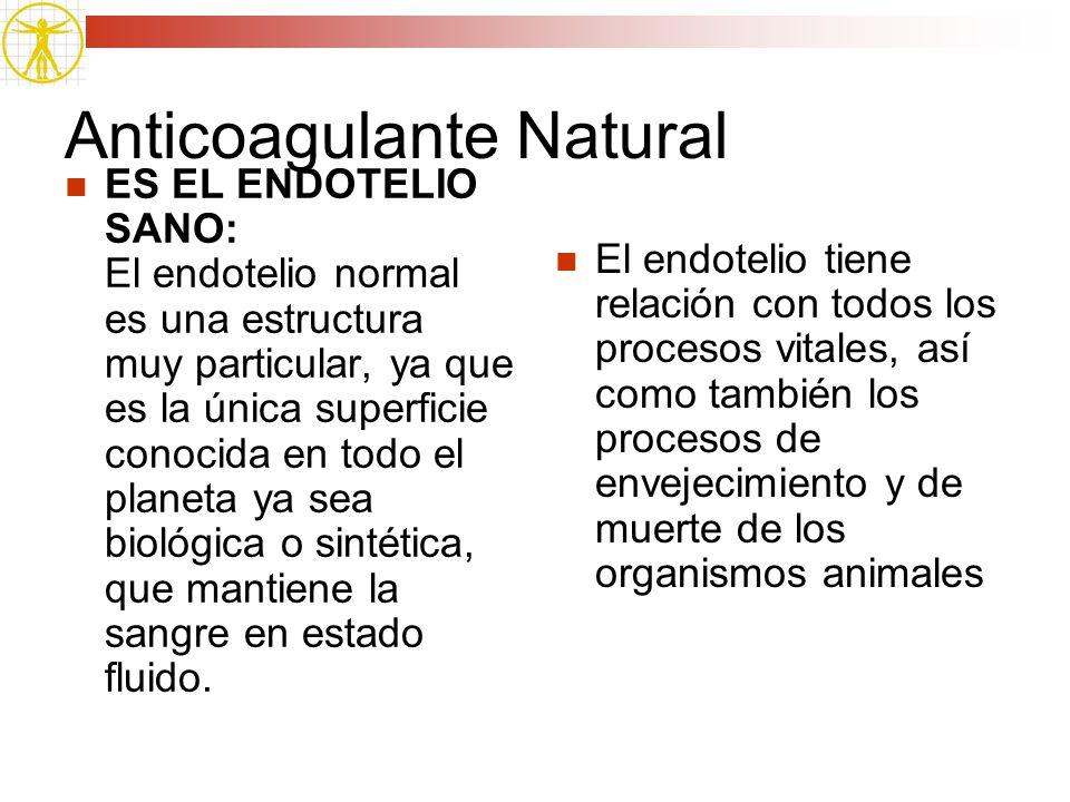 Anticoagulante Natural ES EL ENDOTELIO SANO: El endotelio normal es una estructura muy particular, ya que es la única superficie conocida en todo el p