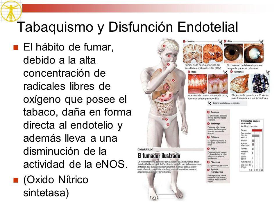 Tabaquismo y Disfunción Endotelial El hábito de fumar, debido a la alta concentración de radicales libres de oxígeno que posee el tabaco, daña en form