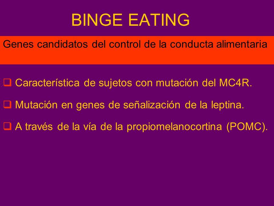 BINGE EATING Característica de sujetos con mutación del MC4R. Mutación en genes de señalización de la leptina. A través de la vía de la propiomelanoco