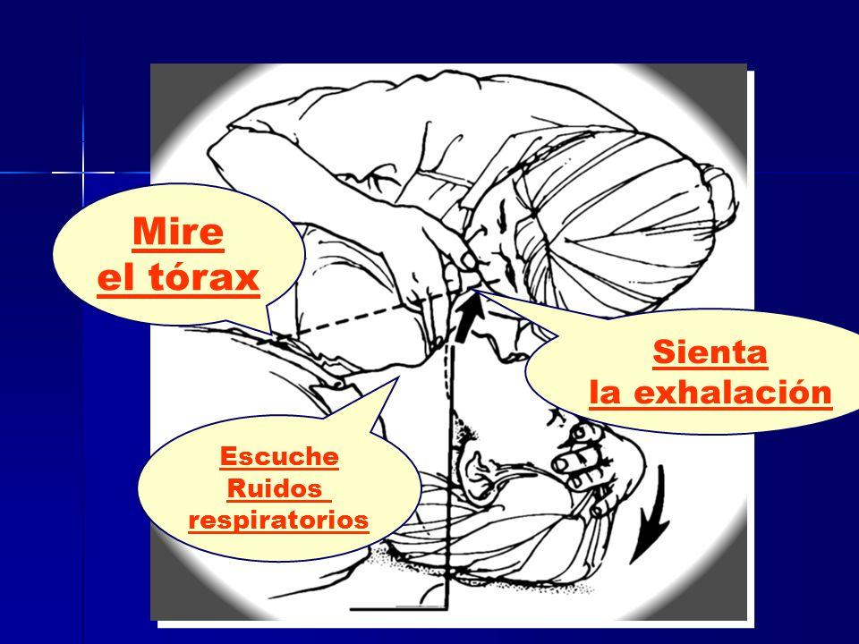 Sienta la exhalación Escuche Ruidos respiratorios Mire el tórax