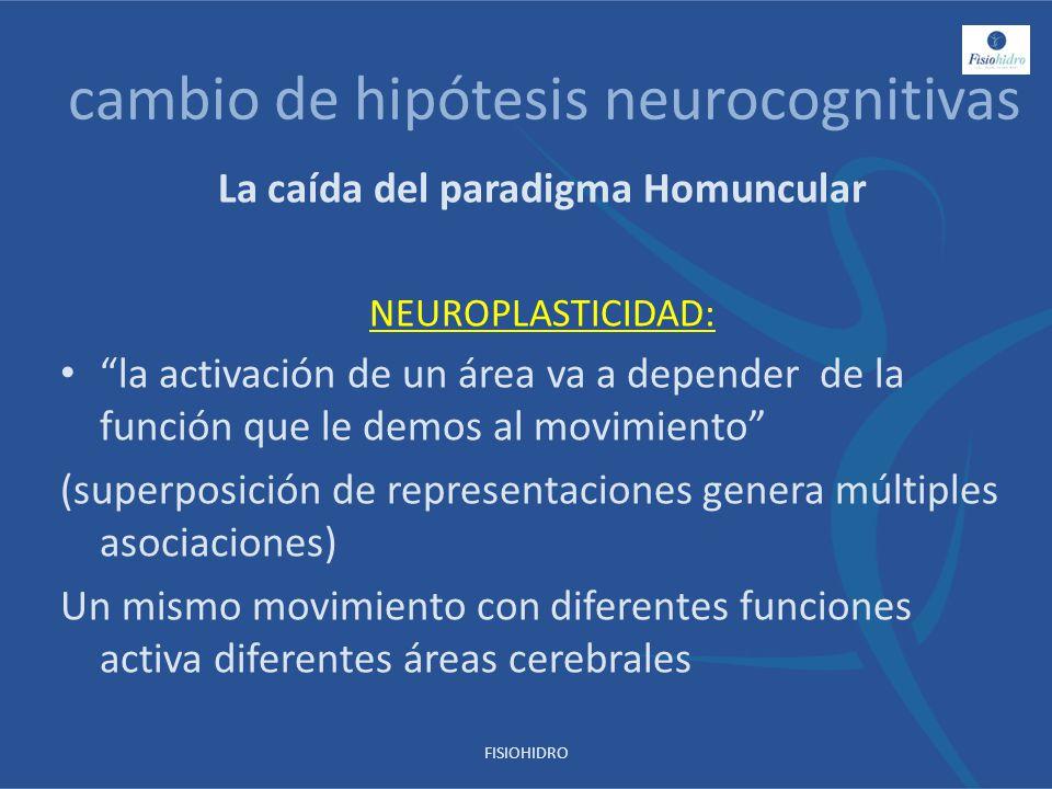 cambio de hipótesis neurocognitivas La caída del paradigma Homuncular NEUROPLASTICIDAD: la activación de un área va a depender de la función que le de
