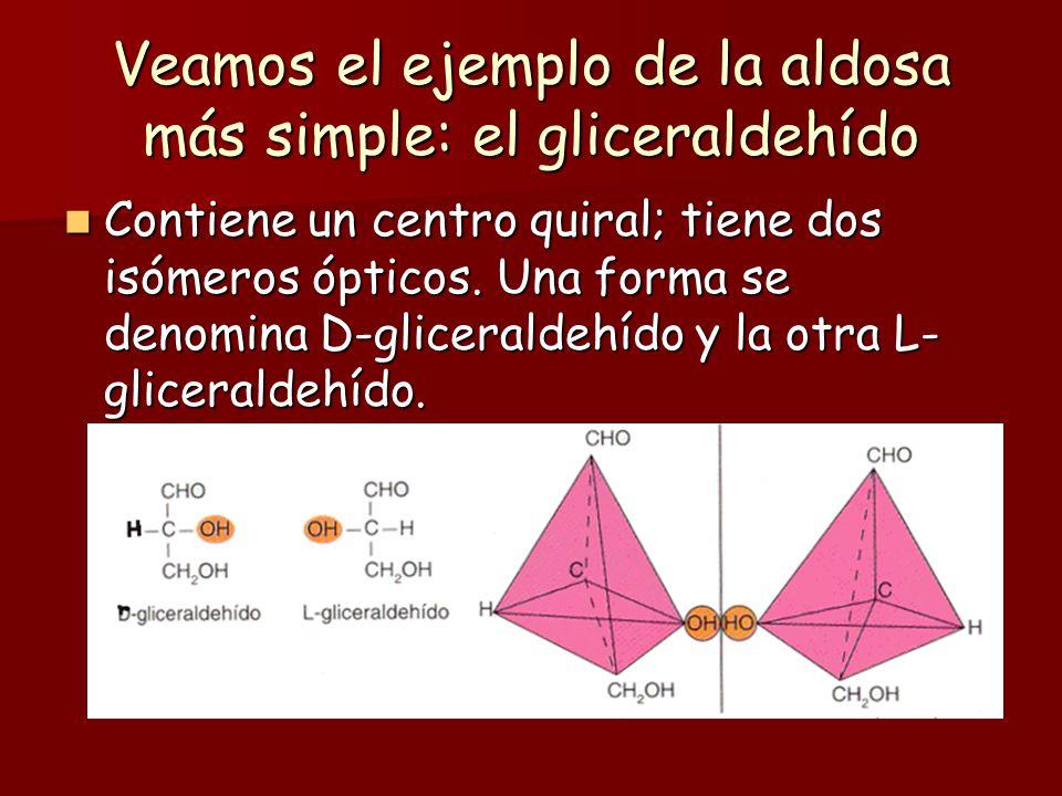 Los monosacáridos tienen isomería óptica: Casi todos los monosacáridos tienen uno o más átomos de C asimétricos o quirales. Casi todos los monosacárid