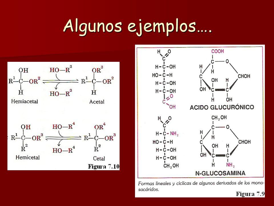 Desoxiazúcares: En ellos, alguno de los grupos hidroxilo del monosacárido de origen está sustituido por un átomo de hidrógeno. El más importante es la