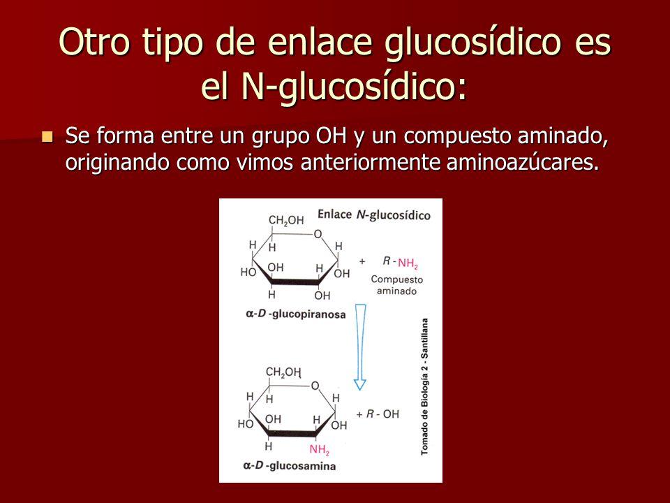 La lactosa y la maltosa tienen poder reductor. La lactosa y la maltosa tienen poder reductor. La sacarosa no posee poder reductor. La sacarosa no pose